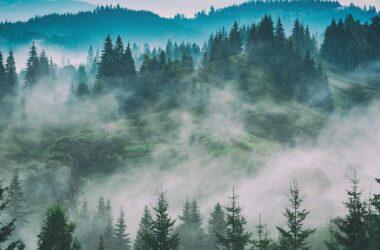Prava izbira razvlažilnika zraka – nasveti za nakup in priporočila